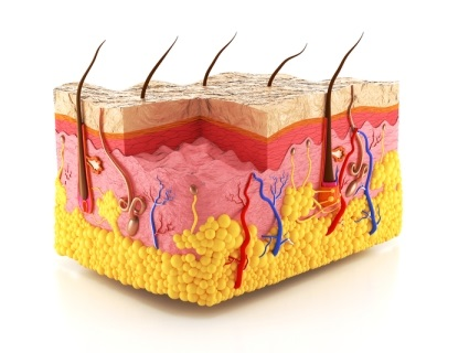 Skin is the outer covering of vertebrate animals. It is the largest organ of the body and has many different functions.