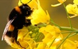 A parasitic mite has helped spread a particularly nasty strain of a virus to countless honeybees, helping to wipe out hundreds of colonies, according to the latest study.