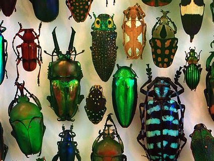The Great Bug Hunt 2021 is on! An exciting competition for primary school children that explores the bug world outdoors! Photo: H. Zell