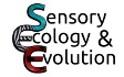 Teach about adaptation and camouflage through engaging online games. The Sensory Ecology and Evolution Group at University of Exeter is using online games to explore the effectiveness of different animal camoufleage. Suitable for upper primary and secondary age pupils.