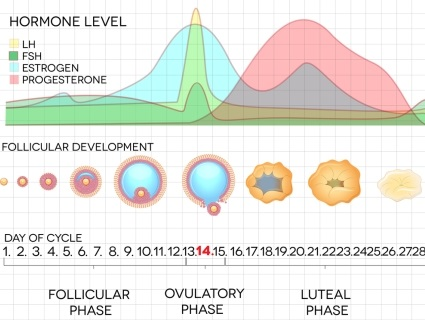 A concise  resource covering hormones in the human body with clear animated graphics.